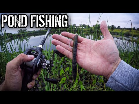 Pond Fishing With A Ned Rig And Stick Bait (Bass Fishing Lures That WORK!)