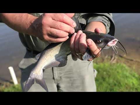 July 2020 Fishing Report