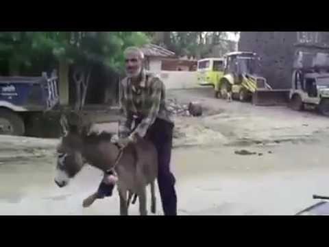 Stupid old man with donkey thumbnail