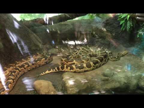 Woodland Park Zoo (seattle)