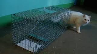 Клетка для отлова диких кошек WWW.DOM49.COM