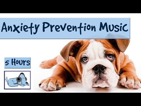 "5 Hours of ""Anxiety Prevention"" Music for Dogs and Pets. Fireworks and Storms – Problem Solved!"
