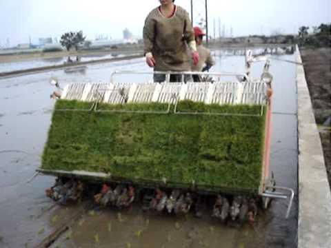 Kubota Rice Transplanter  - 1