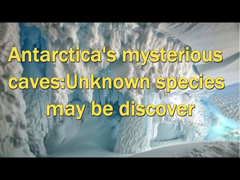 Warm Antarctic caves harbour secret life, Scientists said I Latest Discovery i