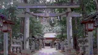 コズミック☆倶楽部 【豊四季の女王】MV