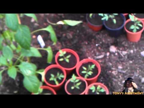 Simple Tips for Growing Grape Vines on a TrellisKaynak: YouTube · Süre: 1 dakika31 saniye