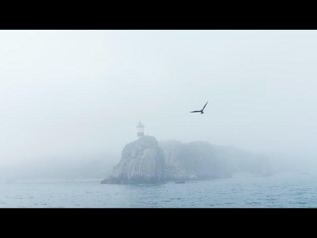 Видеосъемка с воздуха и на воде. Природа Владивостока