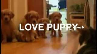 Coco Steel Lovebomb Love Puppy