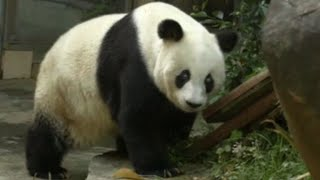 World's oldest panda dies aged 37 in China