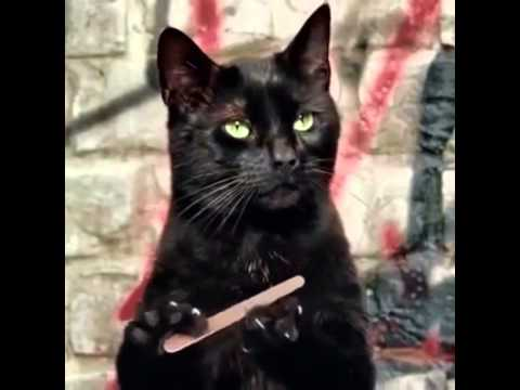 Cat filing nails by Volkosh - YouTube