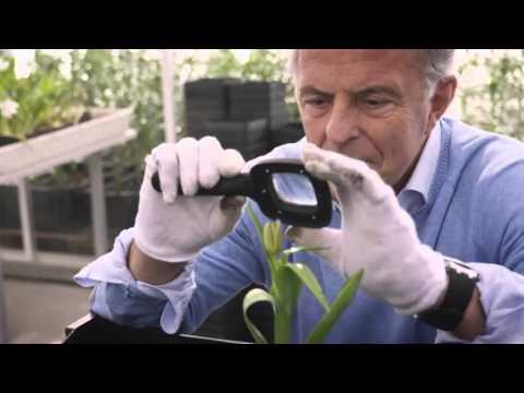Zwarte Tulp seizoen 1   Videoland trailer