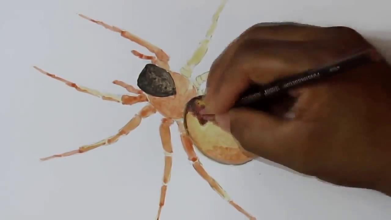 Saidalisola Dessin Réaliste Araignée Youtube