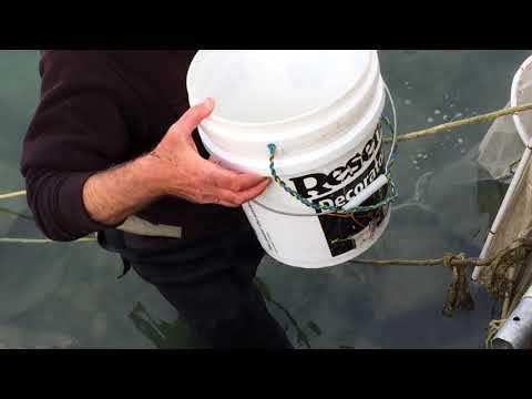Whitebait catch on the Hokitika River