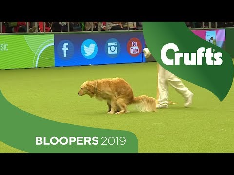 oops!-crufts-bloopers-and-funny-moments!