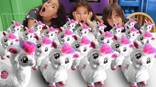 50 Dancing Llamas? Boppi Song and Dance