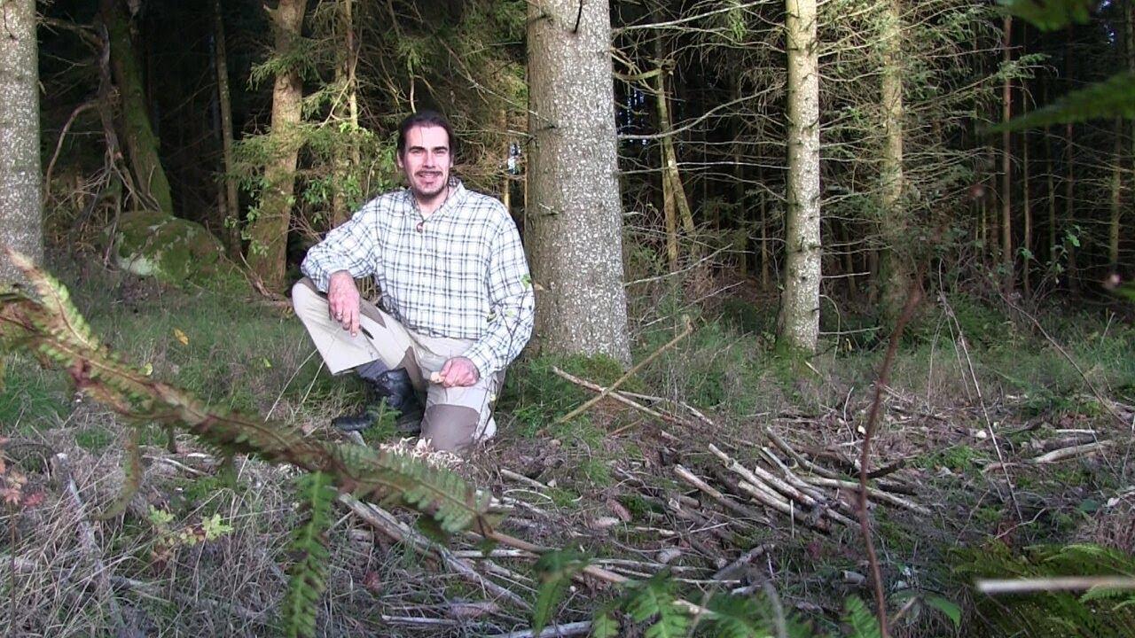 07 | Pilze des Waldes: Krause Glucke und Kuhpilz. Waldspaziergang, traumhafte Naturaufnahmen