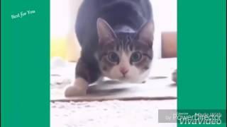 ★★ נסו לא לצחוק ★ אתגר ★ (8/10 נכשלים) ★ חתולים ★★