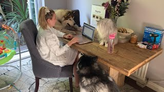 Fluffiest Pets Do Everything To Distract Mum Working From Home! (Cutest Co-Workers!)