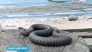 видео Происшествия - Страница 15 - Лента новостей Одессы