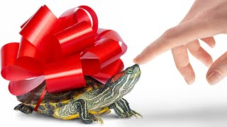 🐢 What Makes Turtles A Perfect Pet