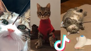 BEST CAT TIKTOKS!! #4