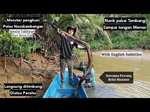 Rekor! Tarik Tambang dengan belut Laut Monster penghuni pulau Nusakambangan | Big Eel fishing
