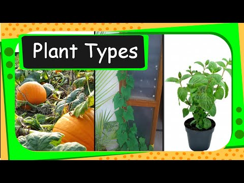 Science - Types of Plants - English