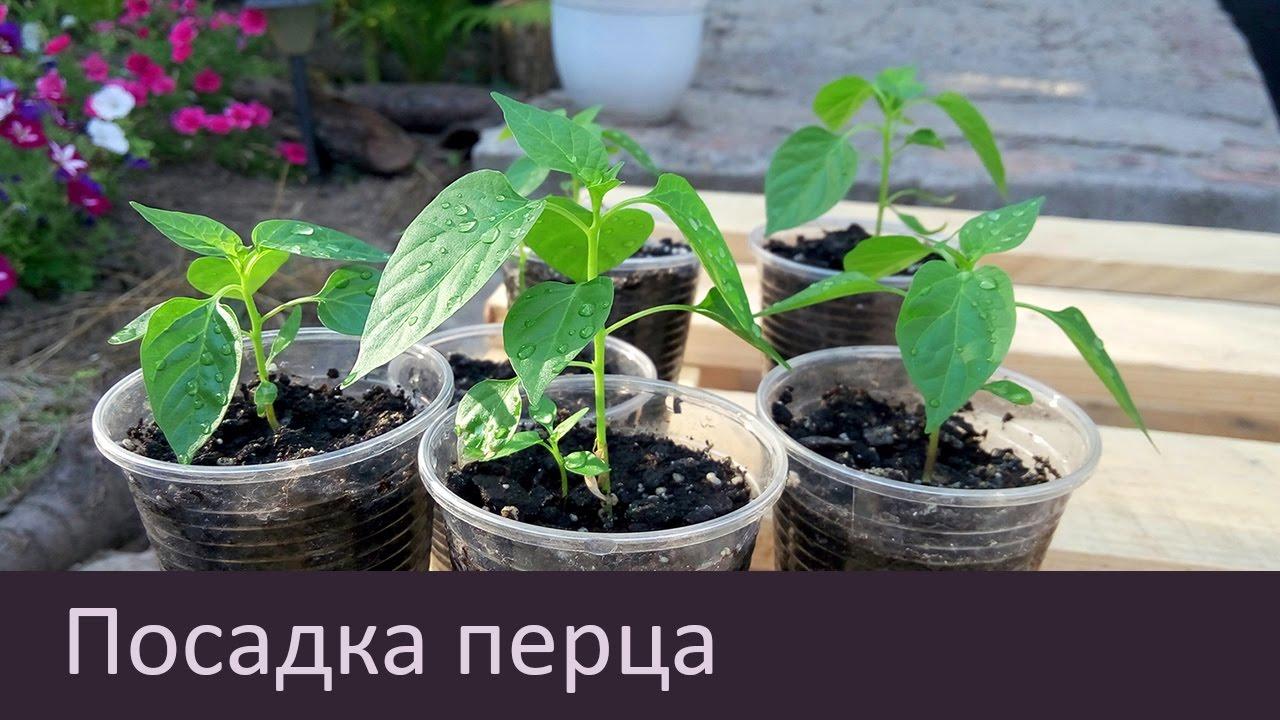 Как выращивать рассаду - когда и как