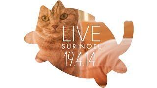 생방송 수리노을  고양이가족 19.4.14 LIVE 【SURI&NOEL】