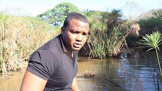 explorando un temible pantanal de peces