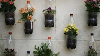 Balcony garden plant ideas
