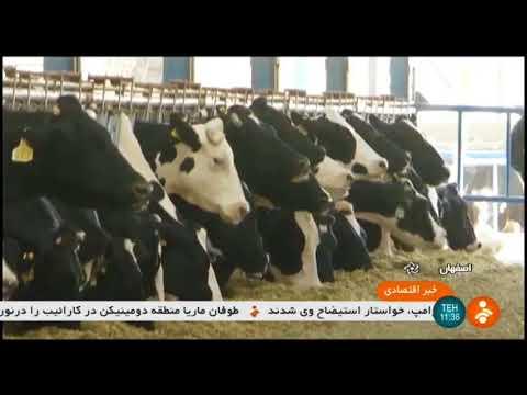 Iran Dairy Farmers & Milk price situation, Isfahan province وضعيت دامداران و قيمت شير اصفهان ايران