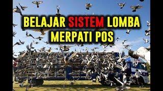 #PEMULA - BELAJAR SISTEM LOMBA MERPATI POS