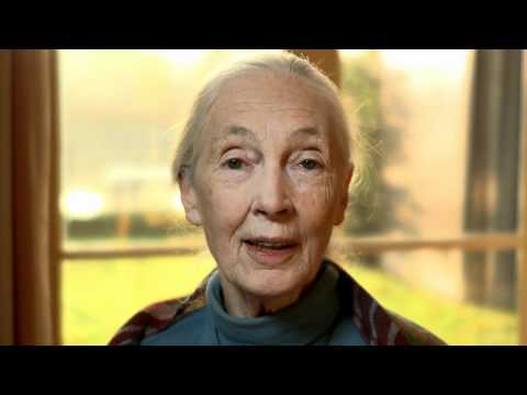 ripples-of-hope:-jane-goodall´s-kickstarter.com-message