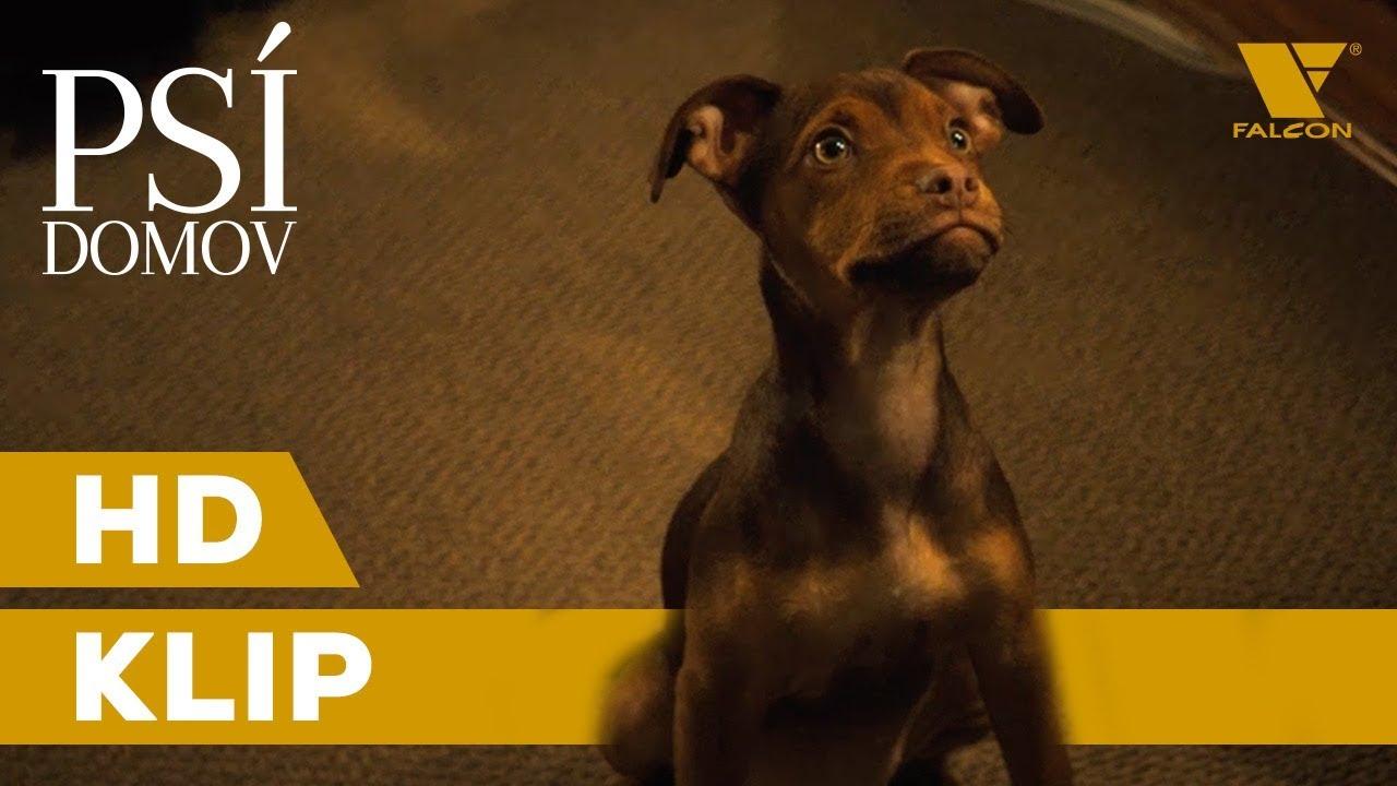 """Psí domov (2019) HD Klip """"Byla to láska""""   CZ tituky"""