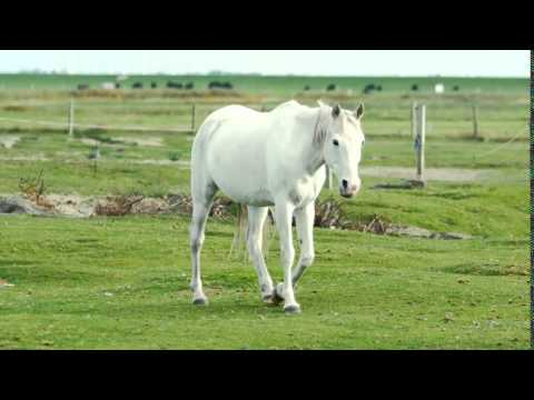 White Horse-Free Footage-4KHD