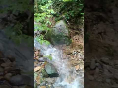 Wutong Mountain streams