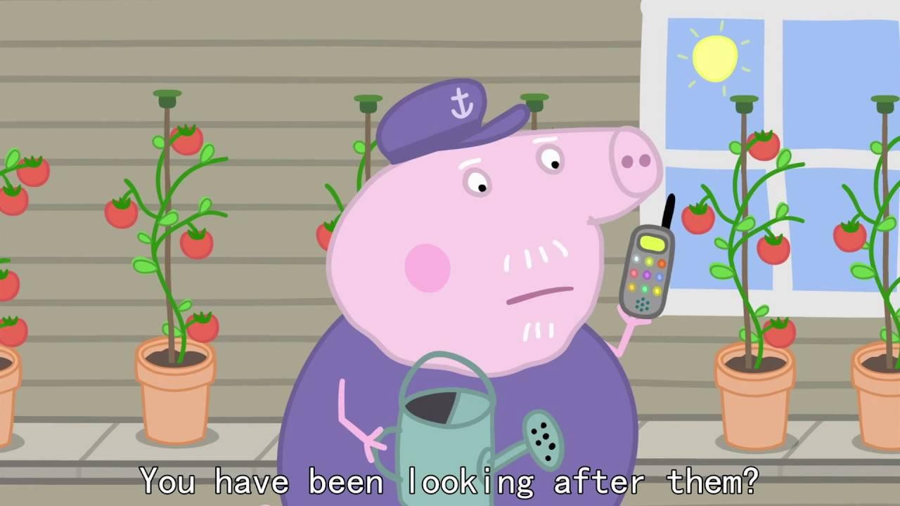Peppa Pig - Champion Daddy Pig (41 episode / 3 season) [HD]