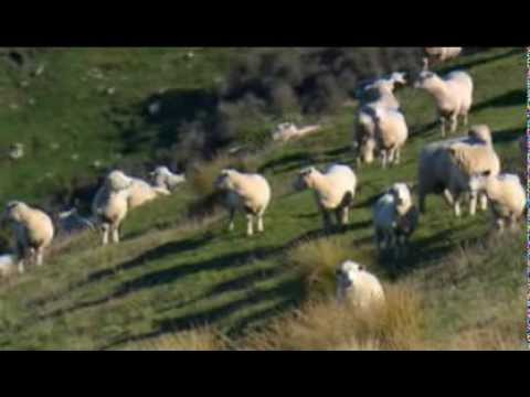 TV One Rural Delivery - Tomorrow's Sheep Farms
