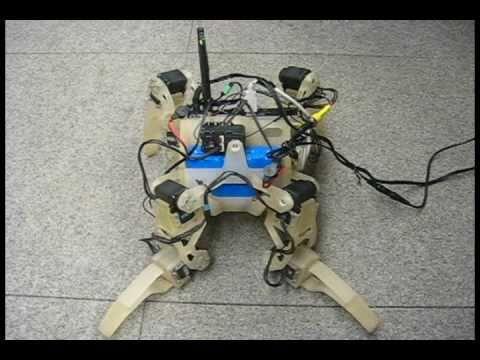 QuadraTot: A Learning Quadruped Robot Demo, Cornell University