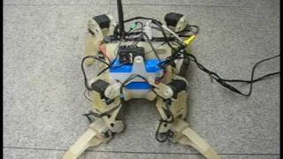QuadraTot: A Learning Quadruped Robot Demo, Cornell University