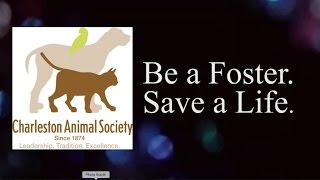 Fostering at Charleston Animal Society