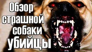 Обзор страшной собаки убийцы