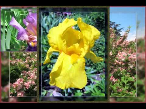 Flowers - Borders  Garden 2015