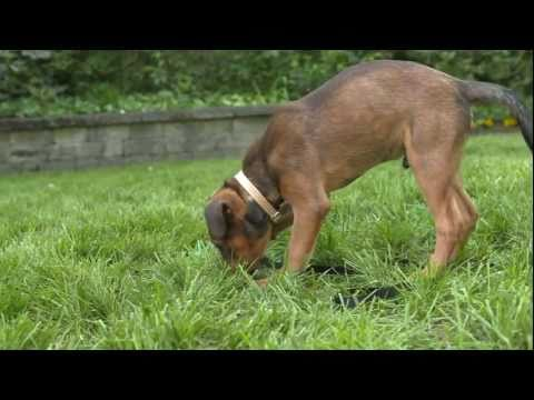 how-to-stop-puppy-biting:-iams®-puppy-training