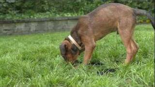 How to Stop Puppy Biting: Iams® Puppy Training