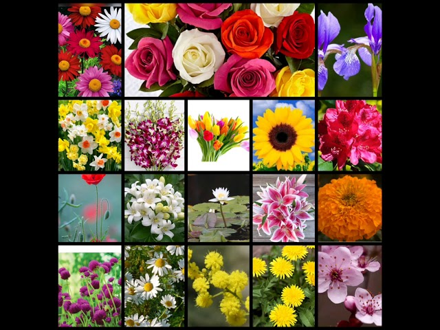 Flowers Name In English And Nepali Youtube
