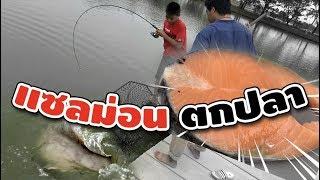 เด็กตกปลา ใช้แซลม่อน  เจอปลายักษ์ !!!!