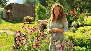 Herbal Flower Garden Tour [How to harvest chamomile &  MEDICINAL flowers]