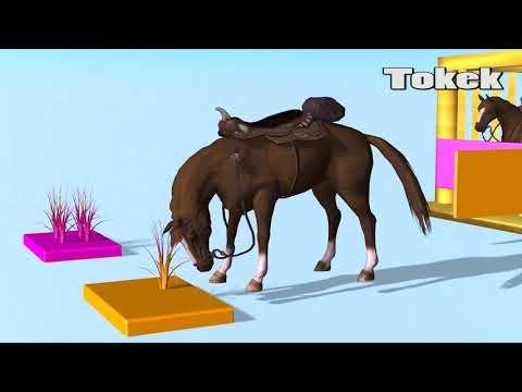 Hewan untuk anak- anak | Pelajari warna dengan kuda | Video pendidikan untuk anak- anak | Tokek